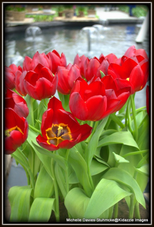 More Beautiful Tulips