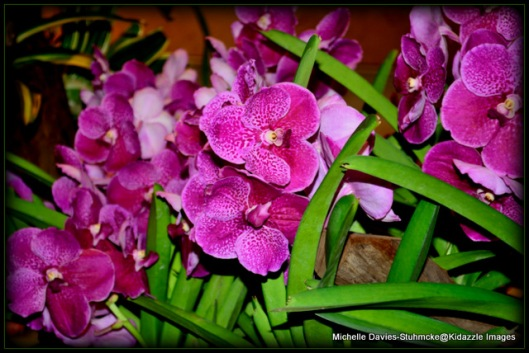 Orchid filled Changi International Airport