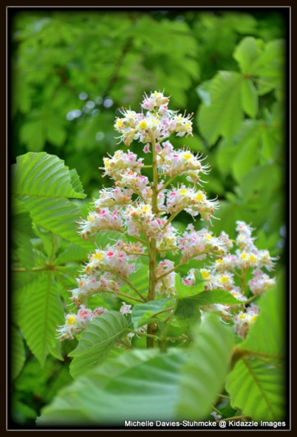 Green Leaves and Horse Chestnut Blossom.