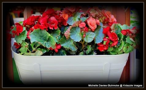 Pretty Flower Box, Bratislava, Sovakia.