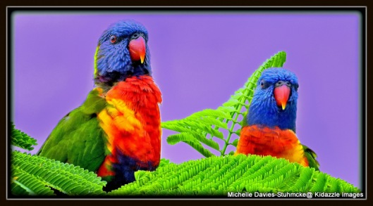 Rainbow Lorikeets, Billy and Lilly